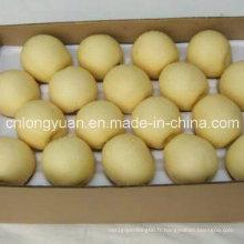 Exportation standard chinois nouvelle poire couronne de culture