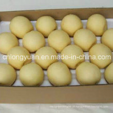Exportação Padrão Chinês Nova Colheita Da Coroa De Pêra