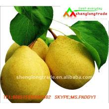 2011 NOVA CORP Fresh YA Pears