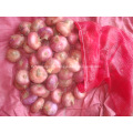 New crop Red onion