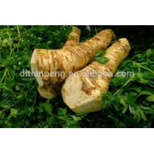 hierba fresca de raíz de rábano picante en venta con certificado ISO