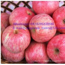 Shandong Origin New Crop FUJI Apple Health Food