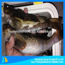 Exportateurs de poissons