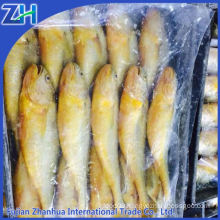 Frozen Yellow croaker fish New Arrived