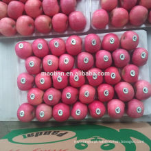 Shandong Fresh Red Fuji Apple2017 nova temporada