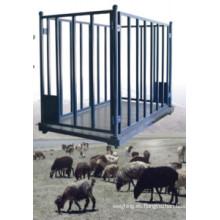 Balanza pesadora de animales para ovejas
