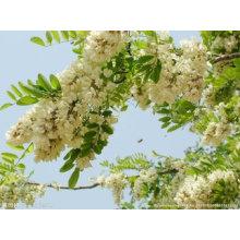 Extrait de plante Extrait de Sophora Japonica 95% Quercétine