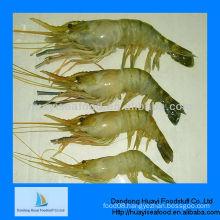 new season frozen shrimps