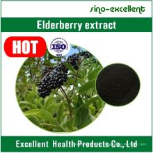 Extracto natural de extracto de saúco en polvo