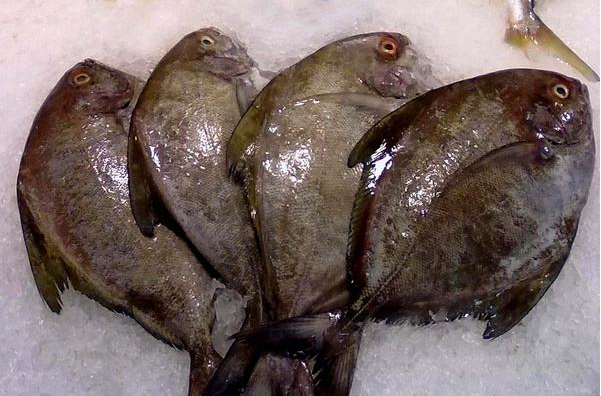 Whole Round Sea Frozen Black Pomfret