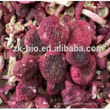 Venda quente Orgânica Russula Extraxt Pó