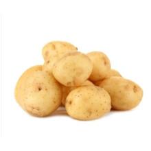 New Crop Fresh Holland Long Shape Potato From China