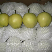 Exported Standard Quality Fresh Early Su Pear