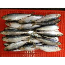 Замороженные морепродукты сардины