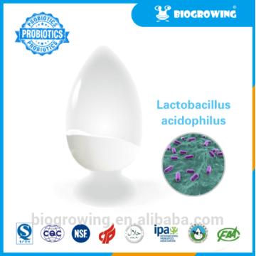 LC - G11 Lactobacillus casei