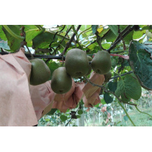 Sac de protection des fruits Kiwi