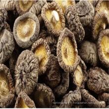 2017 bas prix blanc extrait de champignons de bouton