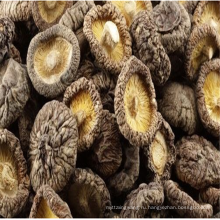 Кнопка 2017 низкая цена белый гриб экстракт
