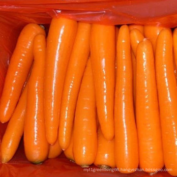 Supplying Fresh Carrot New Crop
