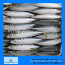 Frozen mackerel whole round for sale
