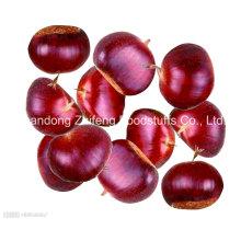 Chinesische neue Crop Fresh Chestnut mit Großhandelspreis