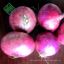 cebollas frescas a granel de China