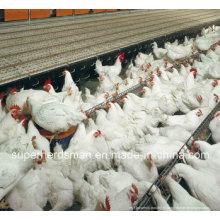 Équipement de ferme de volaille d'Autoamtic pour le poulet d'éleveur