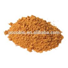 Ingredientes naturais Red Ginseng Extract Powder, saúde em geral