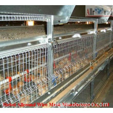 Pullet rearing baby chick cage