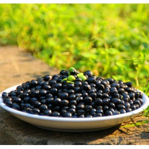 Big Black Beans 6.5mm Zwarte Turtkle Bean