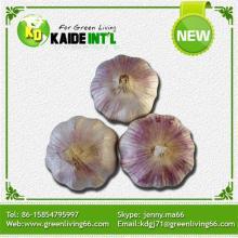 Fresh Vegetables red Garlic