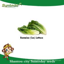 Suntoday uso de salada de vegetais asiáticos planta de jardim de folhas verdes F1 Orgânicos sementes de alface de germinação de sementes de plantador (32001-1)