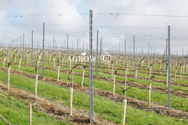Wine Grape Trellis System