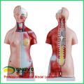 TORSO06(12017) 45см унисекс 23 части туловища анатомический образовательных моделей 12017