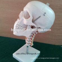 Модель прочного ПВХ с черепной оболочкой с шейным отделением позвоночника, человеческий череп