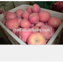 Apple fruit fresh of bulk apples whole sale