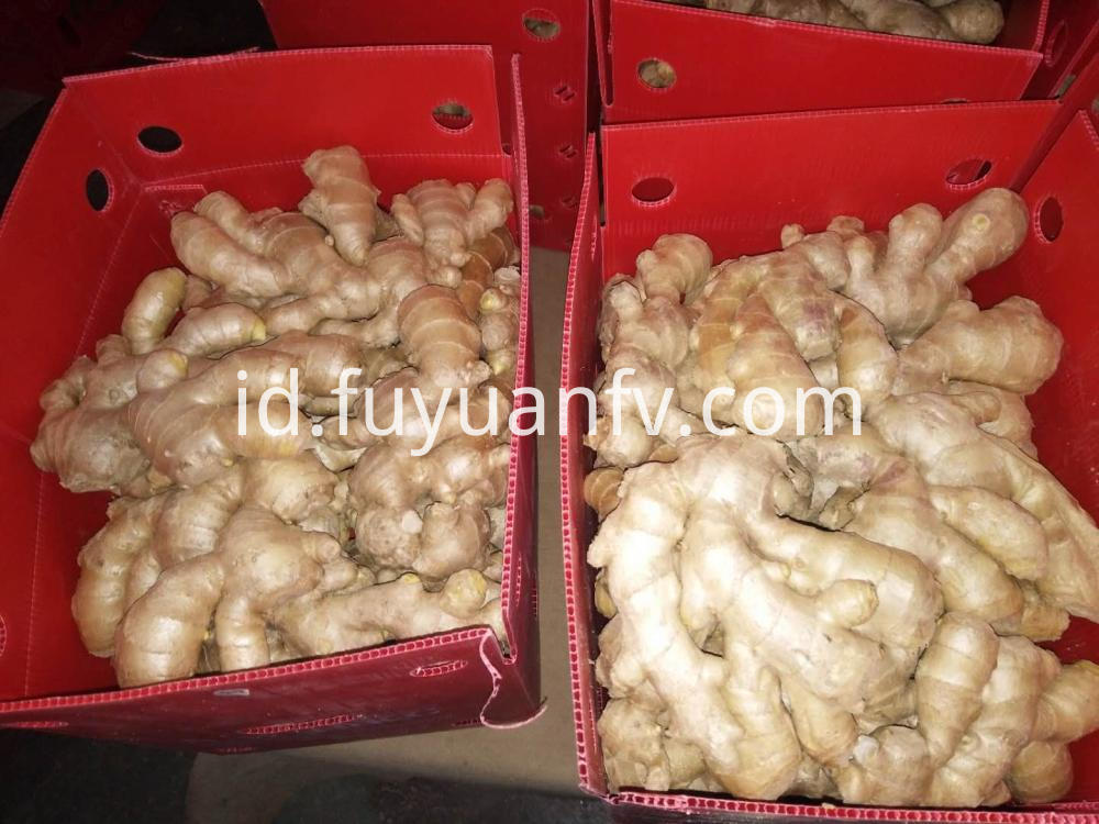 Air Dried Ginger Factory