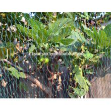 Rede de escalada verde plástica do apoio de planta para venda