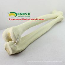 POR ATACADO ÓCULOS DE SIMULAÇÃO 12315 Médica Anatomia Artificial Fêmur + Tíbia Óssea, ortopedia Prática Simulação Osso
