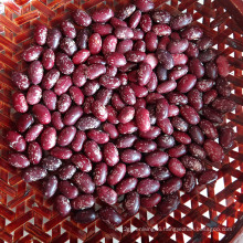 Professional Export Round Purple Kidney Beans