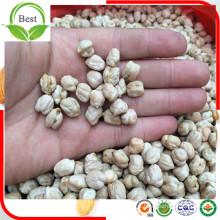 Bons tamanhos de sabor Kicky De Kabuli De China