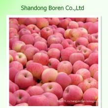 Свежие яблоки Свежие яблоки Лучшая цена Китайские яблоки FUJI