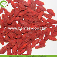 Factory Super Food Kering Red Goji Bayas