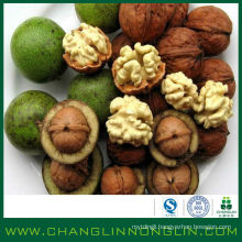 2014 new organic full of high protein Top quality Walnut in shell selling to america