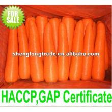 gewaschen und sauber frische Karotten