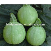 MSQ072 Yuan ronde forme vert clair f1 hybride graines de courge