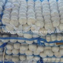 Ail blanc naturel frais avec sac en maille