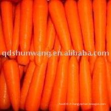 2015 carotte fraîche