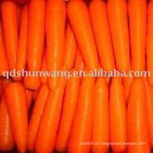Cenoura fresca 2015
