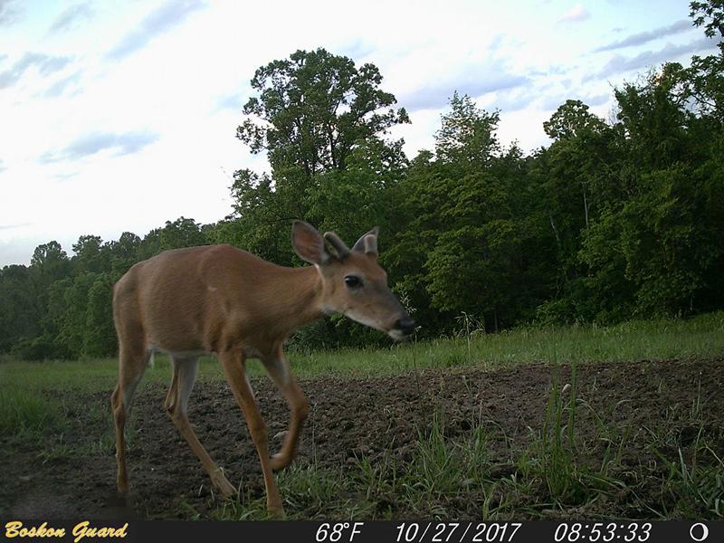 BG526 hunting camera